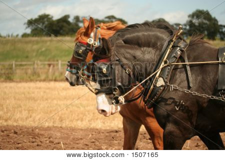 Ploughing With Horses