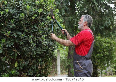 Landscaping adult men cut tree in a garden
