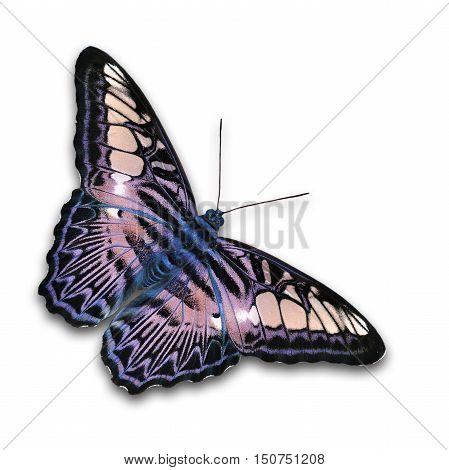 Beautiful Purple Butterfly