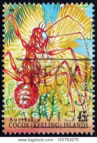 COCOS ISLANDS - CIRCA 1995: a stamp printed in Cocos Islands Australia shows Yellow Crazy Ant Anoplolepis Gracilipes Insect circa 1995
