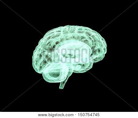 Model of the brain isolated on a black background. 3D illustration