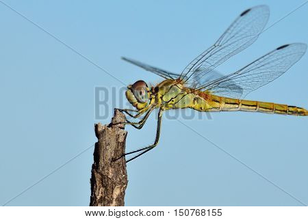 Beautiful dragonfly isolated with blue sky background