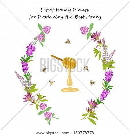 Honey plant set for producing the best honey for banner or flyer. Wild flowers and bee. Flat design botanical vector illustration eps 10