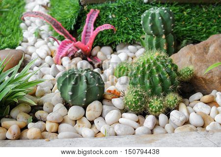 Cactus in stone park beautifulSelect focus with shallow depth of field