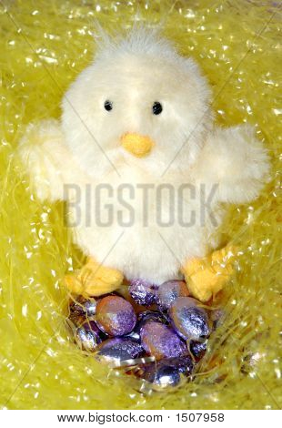 Chick With Eggs15