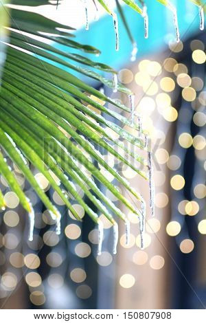 Palm with icicles in winter. Climate change Global warming concept