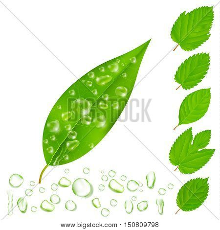 Leaves with drops customizable isolated images set with various editable shapes of drops and leaves vector illustration