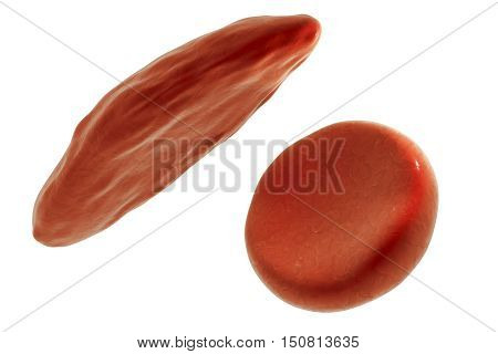Sickle cell and normal red blood cells, 3D illustration