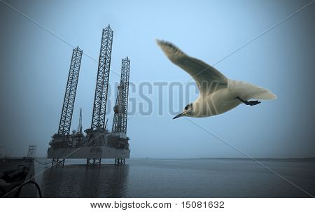 Oil Rig And Seagull