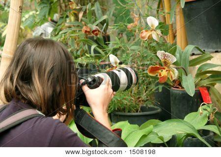 Fotograf In Tropic Garden