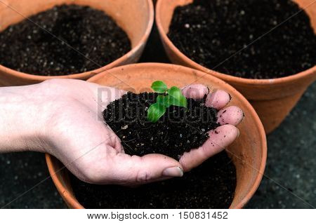 A womans hand plants a plant in the garden.