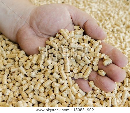 Male hand takes the wood pellets .Biofuels , an alternative fuel for the boiler. Wood pellets used as cat litter.