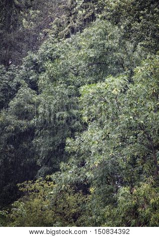 heavy rain shower and storm in the forest