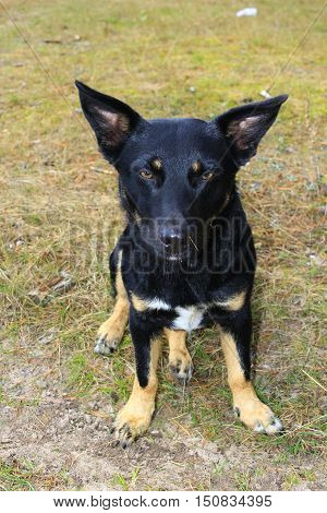 black nice mongrel with red paws sits on the grass