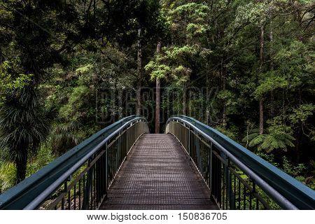 Dense Green Fir Treed Forest Trail Way