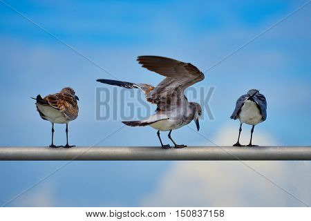 Three seagulls sitting on a railing in natural light