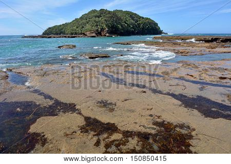 Landscape Of Goat Island Beach New Zealand