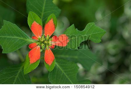 Vegetation, Nature, Leaf, Flower, Season, Freshness, Summer, Growth, Close-up, Macrophotography
