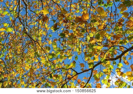 Autumn Leaves Against Sky On The Background. Fall Foliage
