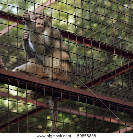 Monkey behind the bars sitting on the fence