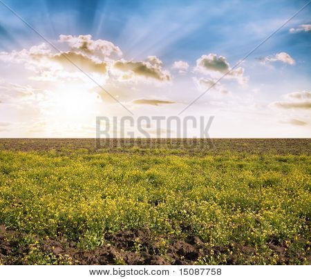 loam ground, sunset in the fields