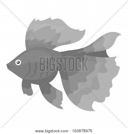 Gold fish icon monochrome. Singe aquarium fish icon from the sea, ocean life monochrome.