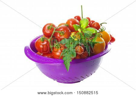 yellow and red tomatoes on white background