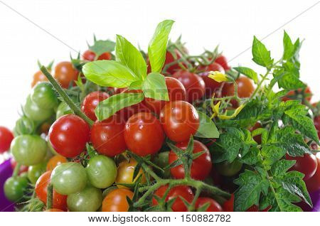 appetizing cherry tomatoes on a white background