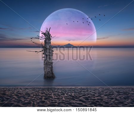 Idyllic scenery at dawn with big moon rising over horizon and lone dried tree in ocean. Dream concept.