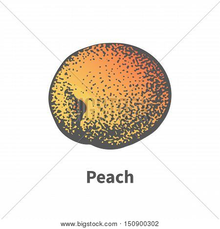 Vector illustration doodle sketch hand-drawn juicy ripe peach. Isolated on white background. The concept of harvesting. Vintage retro style.