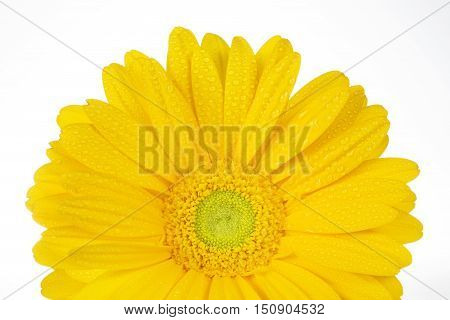 pretty yellow gerbera isolated on white background