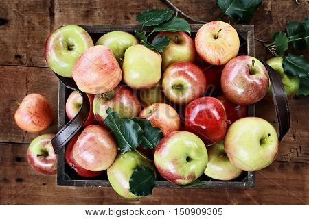 Freshly picked bushel of apples in an old vintage wooden crate with leather handles on a rustic wood table shot from overhead.