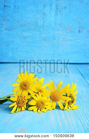 closeup of yellow daisies on blue wood