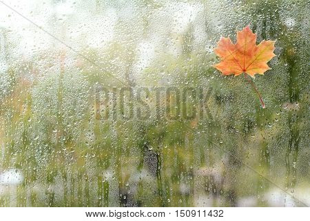 small maple leaf has stuck to the window with a wet rain / rainy autumn weather outside