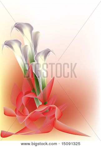 Beautiful white calla lily with red ribbons
