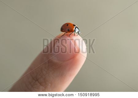 Red spotted ladybird or ladybug on top of a human finger over a grey outdoor background with copy space.