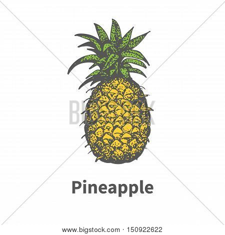 Vector illustration doodle sketch hand-drawn single yellow ripe juicy pineapple. Isolated on white background. The concept of harvesting. Vintage retro style.