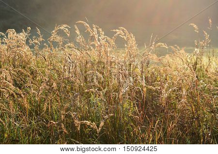 view on a sunny summer meadow south Bohemia . Czech Republic