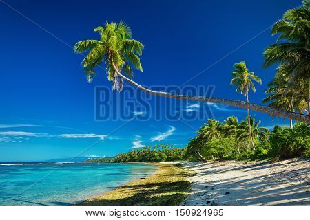 Tropical beach on south side of Samoa Island with many palm trees