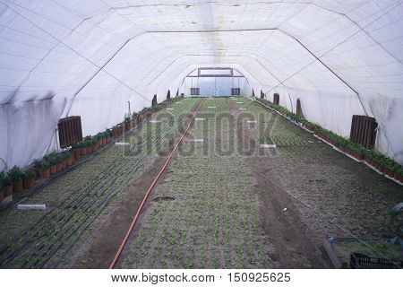 greenhouse cultivation of plants flowers vegetables inside warm garden
