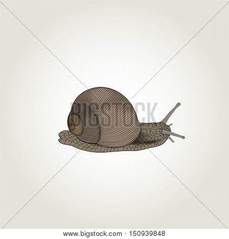 Hand drawing snail. Abstract element for design. Vector illustration.