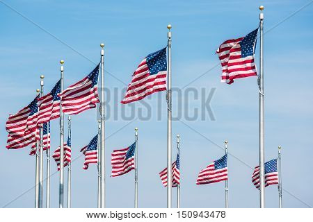 Curved row of many American Flags in Washington D.C. by monument isolated against blue sky