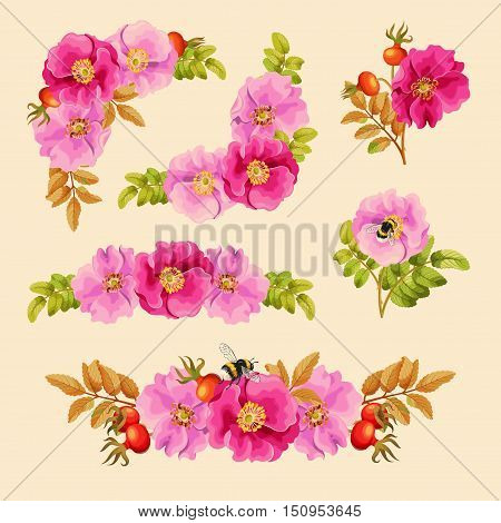 Vector set of decorative elements with dog rose and bumblebees