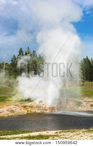 Riverside Geyser erupting. Upper Geyser Basin (Old Faithful Area), Yellowstone National Park, USA