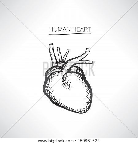 Human heart isolated. Internal organ icons sketch. Anatomy engraving hand drawn sign collection