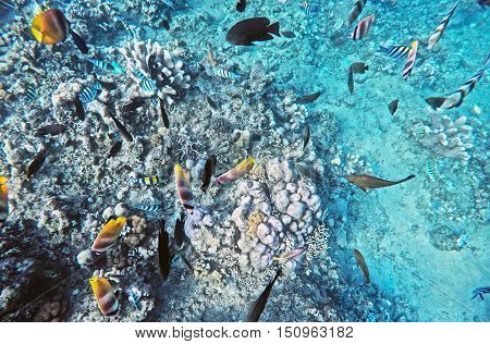 Coral Wildlife in Bali Indonesia underwater colorful fish 2