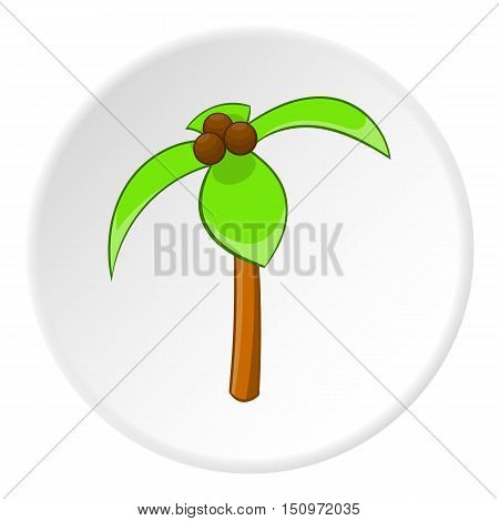 Palma icon. Cartoon illustration of palma vector icon for web