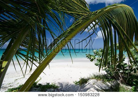 Shadows Under Palm Branches At Ffryes Beach