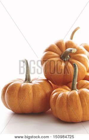 Mini pumpkins on white background