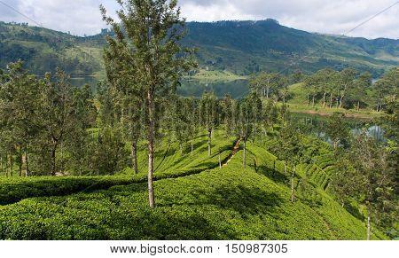 Sri Lanka's Hill Country and Tea estates